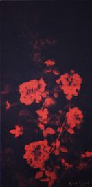 Rose No.11