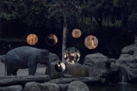 Self Reflection (Elephant)