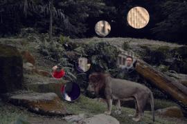Self Reflection (Lion)