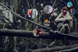 Self Reflection (Monkey)