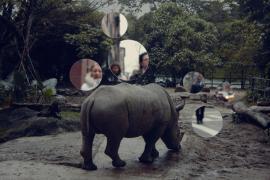 Self Reflection (Rhinoceros)